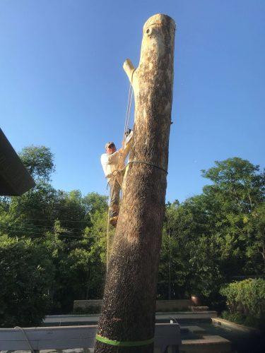 Tree Trimming in Dallas
